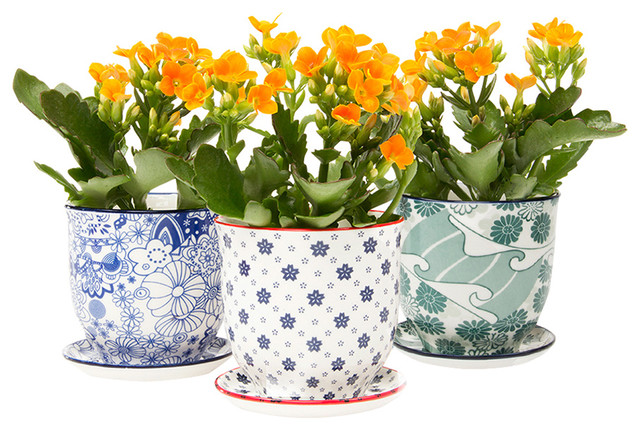 3 pc alice pot and saucer planters set contemporary indoor pots planters by dot bo - Indoor plant pots with saucers ...