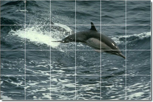 Dolphins whales photo wall tile mural 108 traditional for Dolphin tile mural