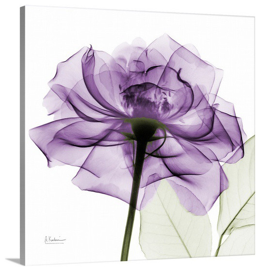Purple Rose X Ray Photograph Wall Art From Great Big
