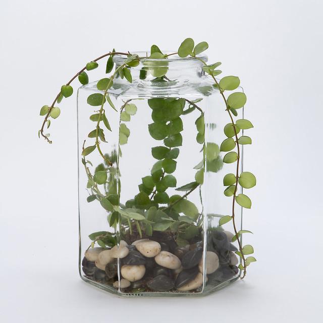 Candy Jar Terrarium - Modern - Terrariums - by Terrain