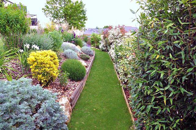 Haie vari e massif de plantes de terrain sec moderne for Plantes pour jardin moderne