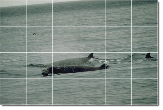 Dolphins whales photo wall tile mural 13 traditional for Dolphin tile mural