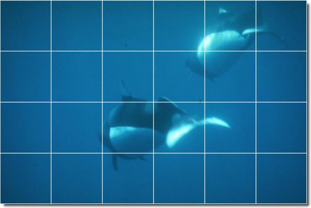 Dolphins whales photo backsplash tile mural 16 for Dolphin tile mural