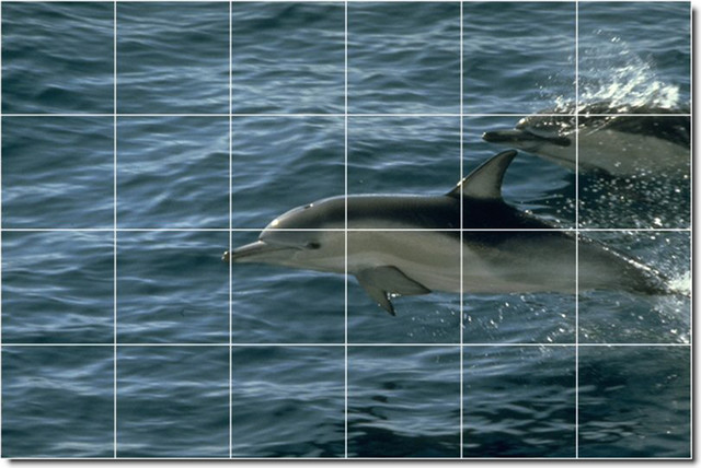 Dolphins whales photo ceramic tile mural 14 traditional for Dolphin tile mural