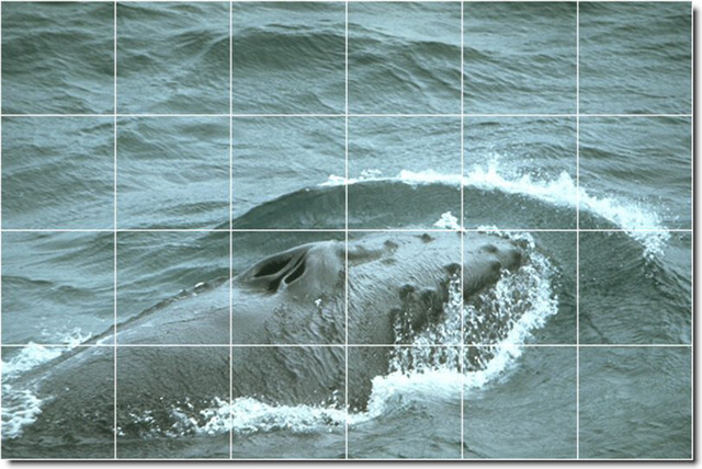 Dolphins whales photo wall tile mural 21 traditional for Dolphin tile mural