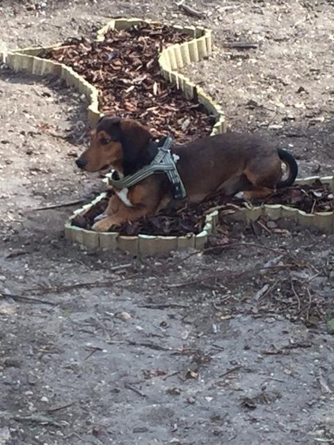 Un giardino a misura di cane