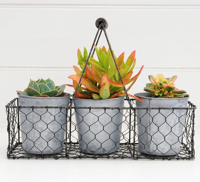 Send a crowning succulent trio contemporary plants for Indoor decorative live plants