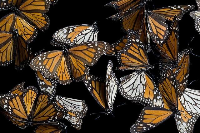 Beautiful butterfly wallpaper wall mural self adhesive for Butterfly mural wallpaper