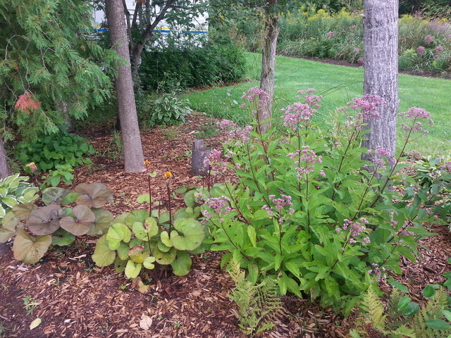 Low maintenance perennial gardens traditional other for Perennial garden maintenance