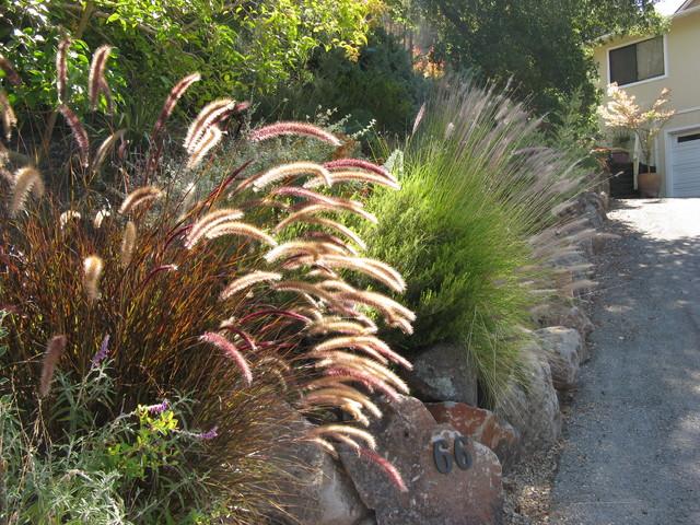 Ornamental grasses for Contemporary garden grasses