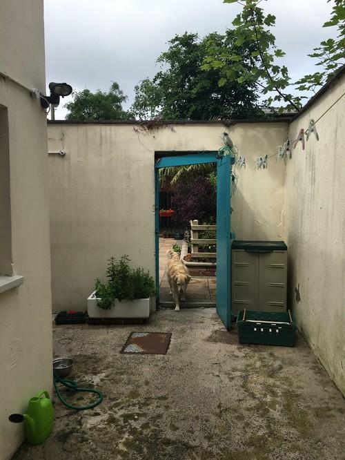 Help to brighten up my garden for Help with my garden design