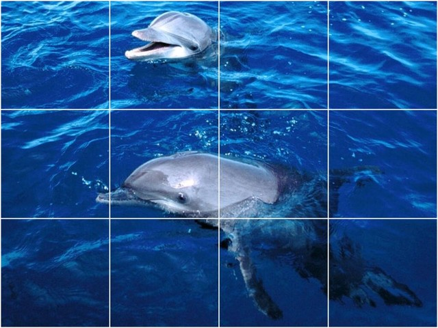 Dolphin photo kitchen bathroom tile mural 1473 48 x36 for Dolphin tile mural