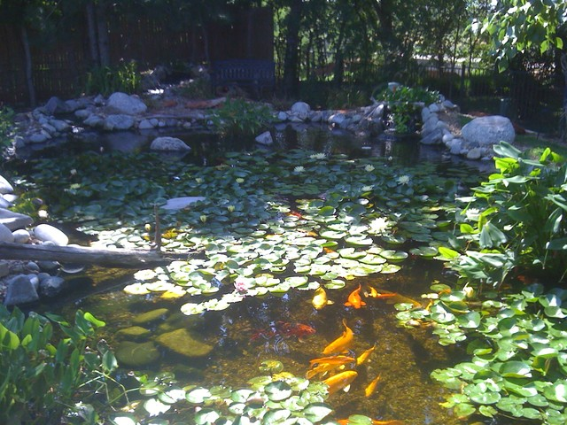 Ecosystem ponds and water gardens by continental ponds for Garden pond ecosystem