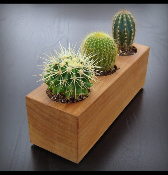 modern cactus planter in reclaimed cedar by andrew 39 s