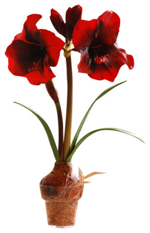 Amaryllis in pot traditional artificial flowers plants for Pot amaryllis