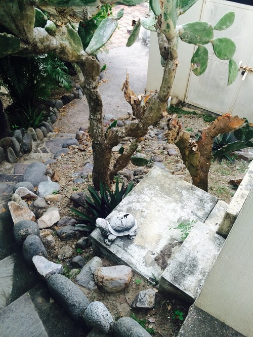 Help me landscape this home in mexico for Help me design my garden
