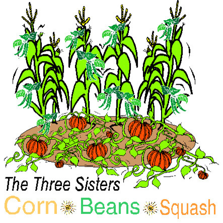 Three Sisters Garden Coloring Page Three Sisters Garden