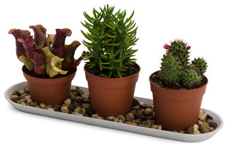 Polystone Plant Trays Indoor Pots Planters Other