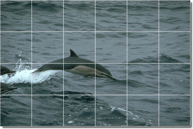 Dolphins whales photo custom tile mural 26 traditional for Dolphin tile mural