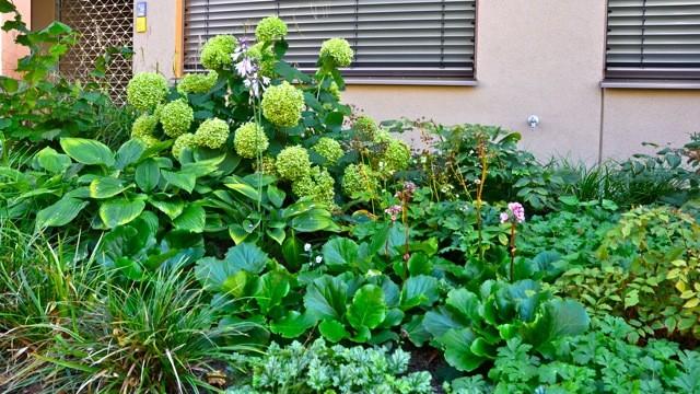 Vorgarten garten berlin von nelka bepflanzung dachterrasse balkon innenhof - Vorgarten bepflanzung ...