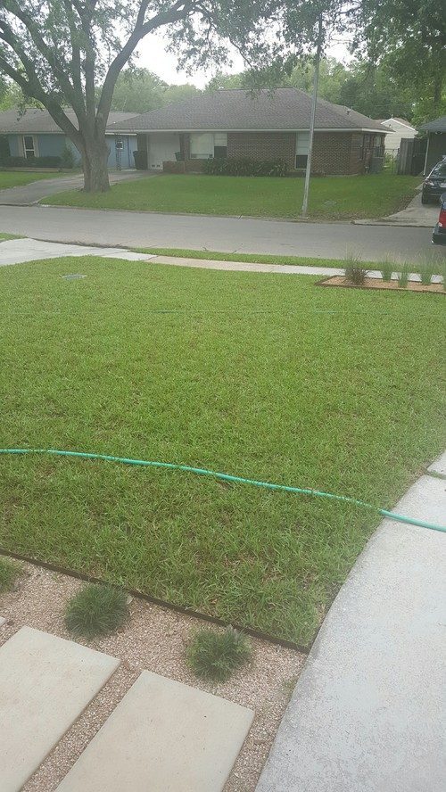 New Sod Care Suggestions Put Down 4 Weeks Ago