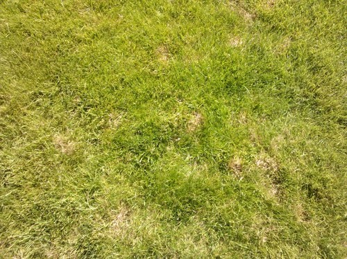 Causes Of Patches On Lawns - The Lawn Care Advice Site