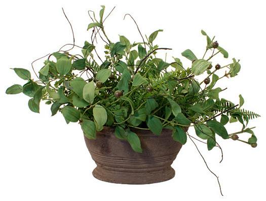 Green Leaf Plant Wide Pot Modern Plants