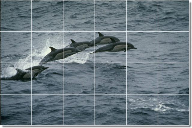 Dolphins whales photo ceramic tile mural 23 traditional for Dolphin tile mural