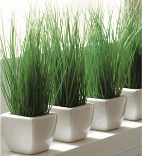 Potted Wheat Grass Modern Indoor Pots And Planters