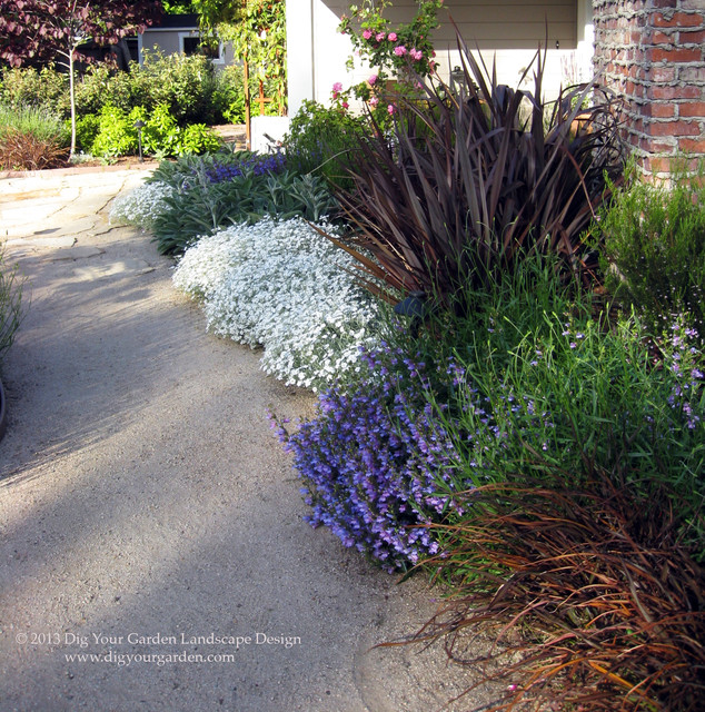 Landscaping With Lavender Plants : Landscape san francisco by dig your garden design