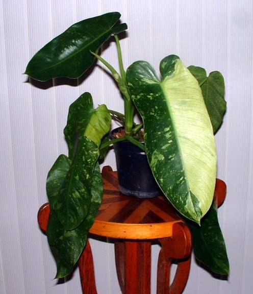 Modern house plants tampa by urgoodbuyz for Modern house plants
