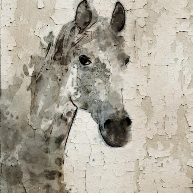 Peacock bathroom towels - Grey Horse Canvas Print By Irena Orlov Farmhouse Fine Art Prints