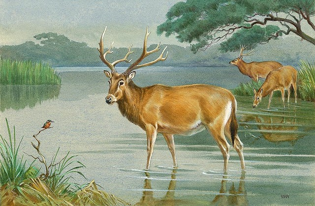 Milu deer wallpaper wall mural self adhesive multiple for Deer mural wallpaper