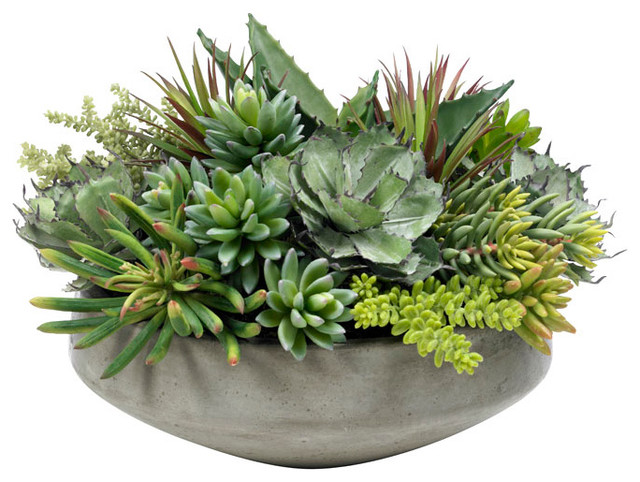 Large Succulent Planting Modern Area Rugs by Diane  : modern area rugs from www.houzz.com size 640 x 482 jpeg 100kB