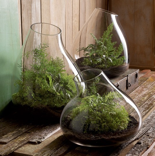 Recycled Glass Terrarium Contemporary Terrariums By SPROUT HOME