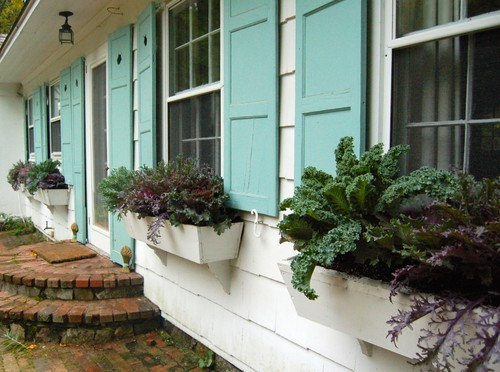 container plantings for autumn