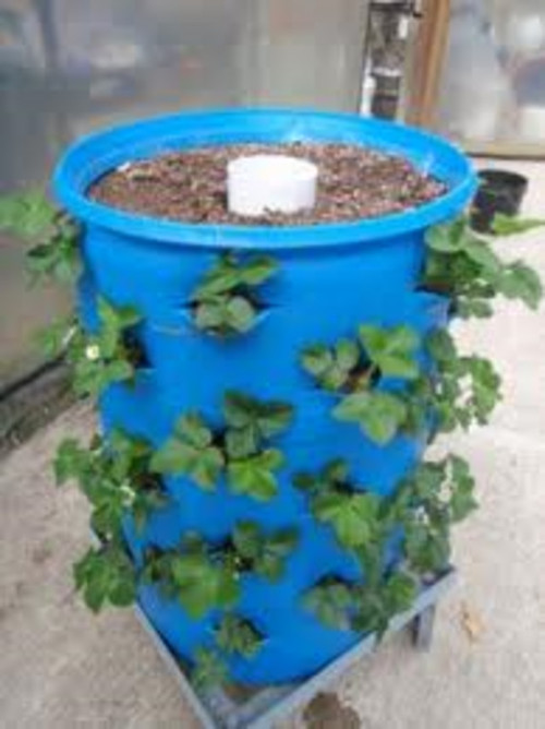 Fruit trees in containers - The garden web forum ...