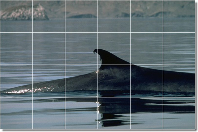 Dolphins whales photo ceramic tile mural 16 traditional for Dolphin tile mural