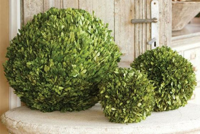 Traditional Plants Preserved Boxwood Ball