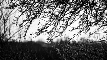 Tree Branches Black and White Fine Art Print, 75x50 cm