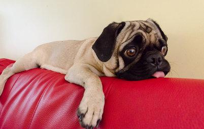 Quel revêtement de canapé choisir quand on a des animaux ?