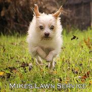 Foto de Mikes Lawn Service