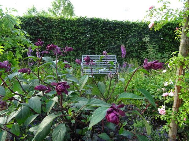 Traditional  by Claudia De Yong Garden Design