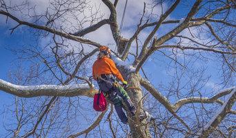 Bell Tree Service