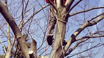 Alliance Property Management Tree Service