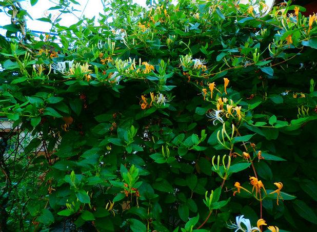 Rustic Garden by Covadonga Gala