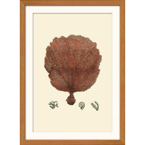 """""""Red Coral"""" Framed Print, 41x56 cm, """"Red Fan Coral"""""""