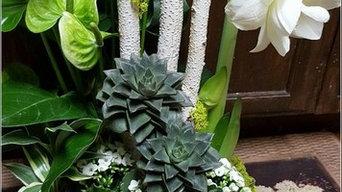 Tu Bloom Designs