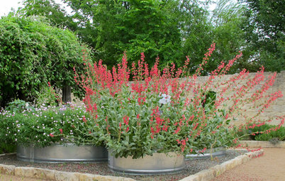 You Can Make Space for Native Plants in Any Landscape