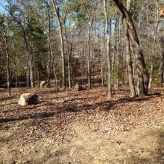 Managing Wooded Backyard